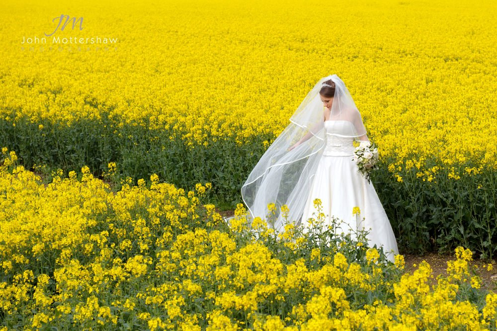 A bride in a field of yellow before her wedding reception at Hassop Hall near Sheffield.